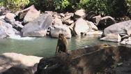 Indie - Goa 017