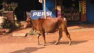Indie - Goa 018